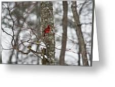 Cardinal In Snow Storm Greeting Card