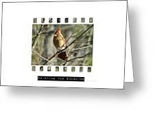 Cardinal In Sunshine Greeting Card