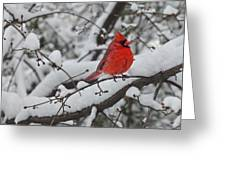 Cardinal In The Snow 1 Greeting Card
