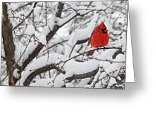 Cardinal In The Snow 3 Greeting Card