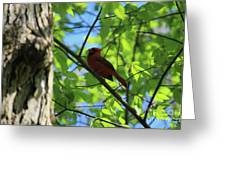 Cardinal In The Springtime Greeting Card