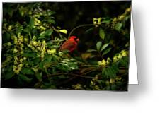 Cardinal In The Trees Greeting Card