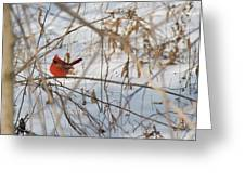 Cardinal In Winter 2 Greeting Card