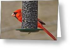 Cardinal On Feeder Greeting Card