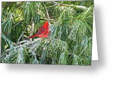 Cardinal On Ice Greeting Card