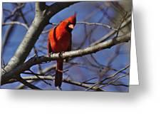 Cardinal On Watch Greeting Card