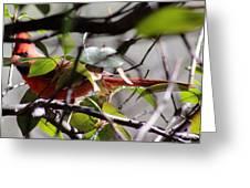 Cardinal Peek-a-boo 032114a Greeting Card