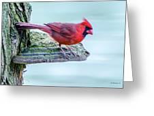 Cardinal Perched Greeting Card