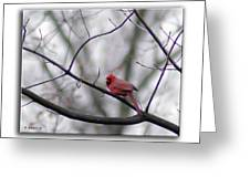 Cardinal Perched On A Branch Greeting Card