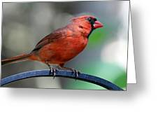 Cardinal Profile Greeting Card