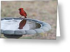 Cardinal Reflection Greeting Card