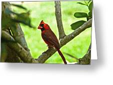 Cardinal Render Greeting Card
