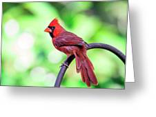 Cardinal Rule Greeting Card