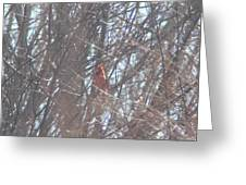 Cardinal Singing  Greeting Card
