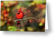 Cardinal Territory Greeting Card