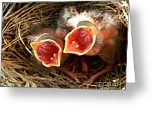 Cardinal Twins - Open Wide Greeting Card