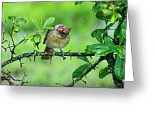 Cardinal Ways Greeting Card