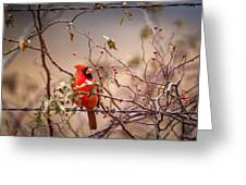 Cardinal With A Mouthful Of Hips Greeting Card