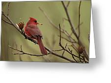 Cardinal With Seed Greeting Card