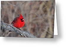 Cardinalis Cardinalis Greeting Card