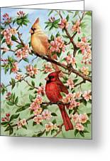 Cardinals In Apple Blossoms Greeting Card