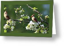 Cardinals In Spring Greeting Card