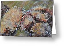 Cardoon  Greeting Card