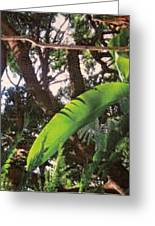 Caribbean Banana Leaf Greeting Card