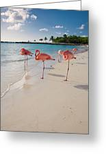 Caribbean Beach With Pink Flamingos Greeting Card by George Oze