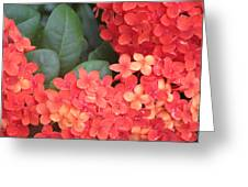 Caribbean Beauty Greeting Card