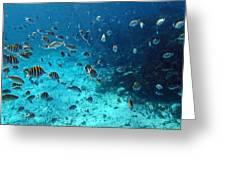 Caribbean Blue_1 Greeting Card