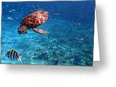 Caribbean Blue_13 Greeting Card