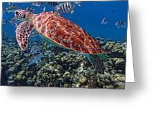 Caribbean Blue_7 Greeting Card