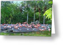 Caribbean Flamingos Greeting Card