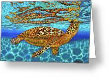 Caribbean Hawksbill Sea Turtle Greeting Card