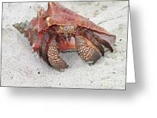 Caribbean Hermit Crab Greeting Card