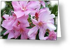 Caribbean Oleander Greeting Card