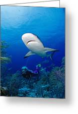 Caribbean Reef Shark Greeting Card by Dave Fleetham - Printscapes