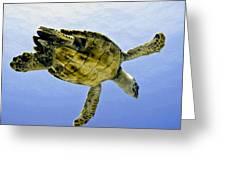 Caribbean Sea Turtle Greeting Card