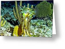 Caribbean Squid At Night - Alien Of The Deep Greeting Card