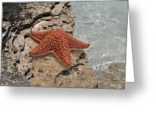 Caribbean Starfish Greeting Card