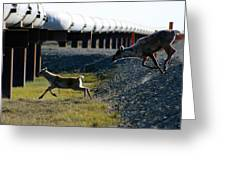 Caribou Cow And Fawn Greeting Card