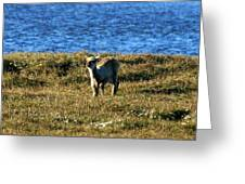 Caribou Fawn Greeting Card