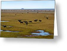 Caribou Herd Greeting Card