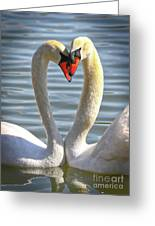 Caring Swans Greeting Card