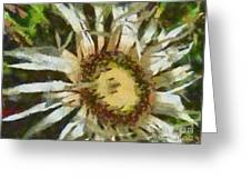 Carline Thistle Greeting Card