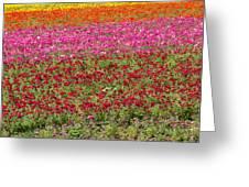 Carlsbad Flower Fields Greeting Card