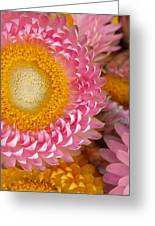 Carmel Flower Greeting Card
