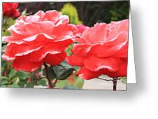 Carmel Mission Roses Greeting Card