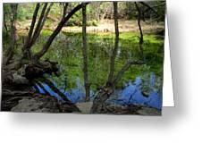 Carmel River At Gilmore Ranch Greeting Card